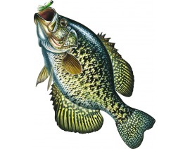 MAGNET GRAND FORMAT CRAPPIE